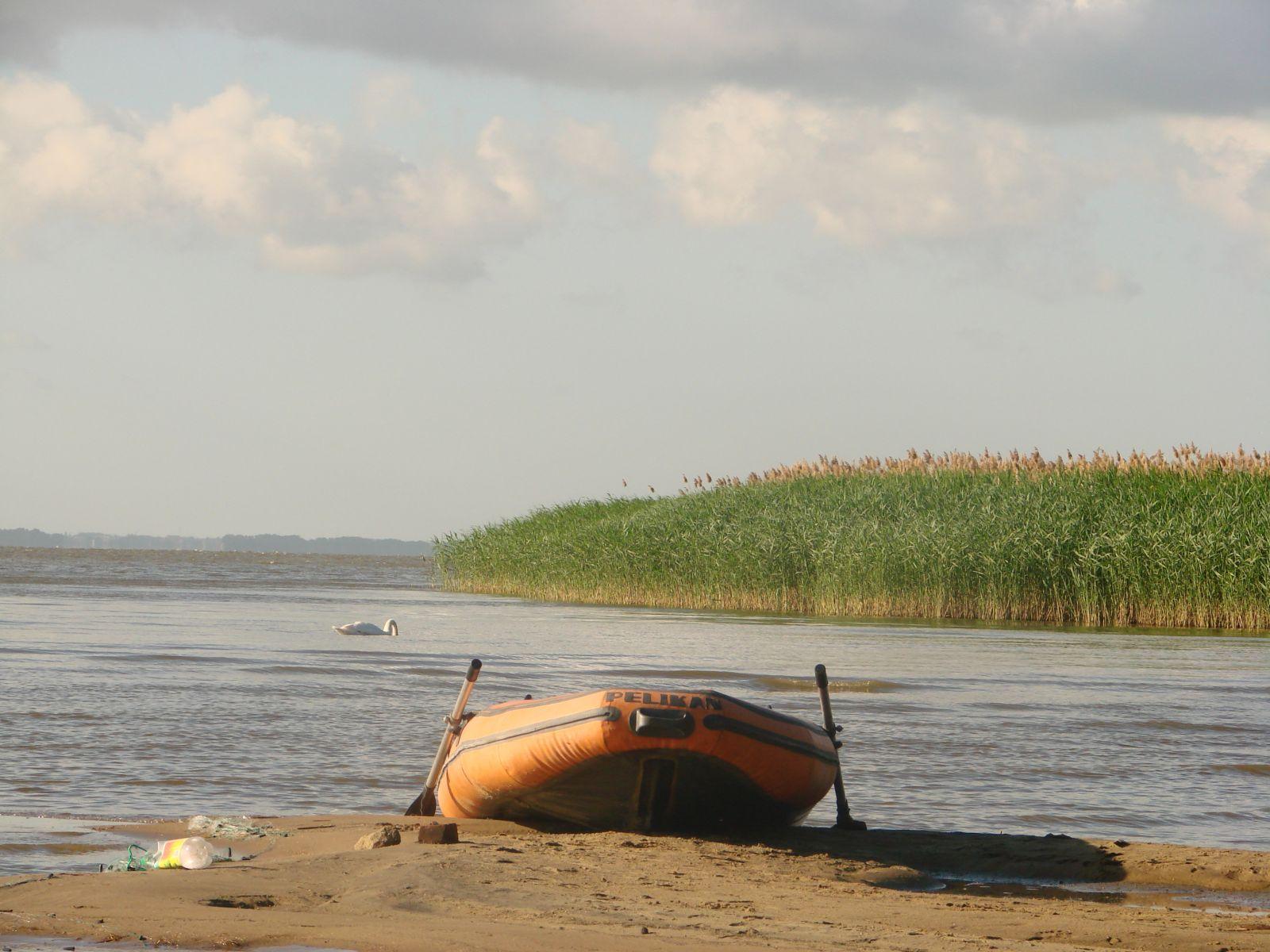 Рыжая лодка   лебедь