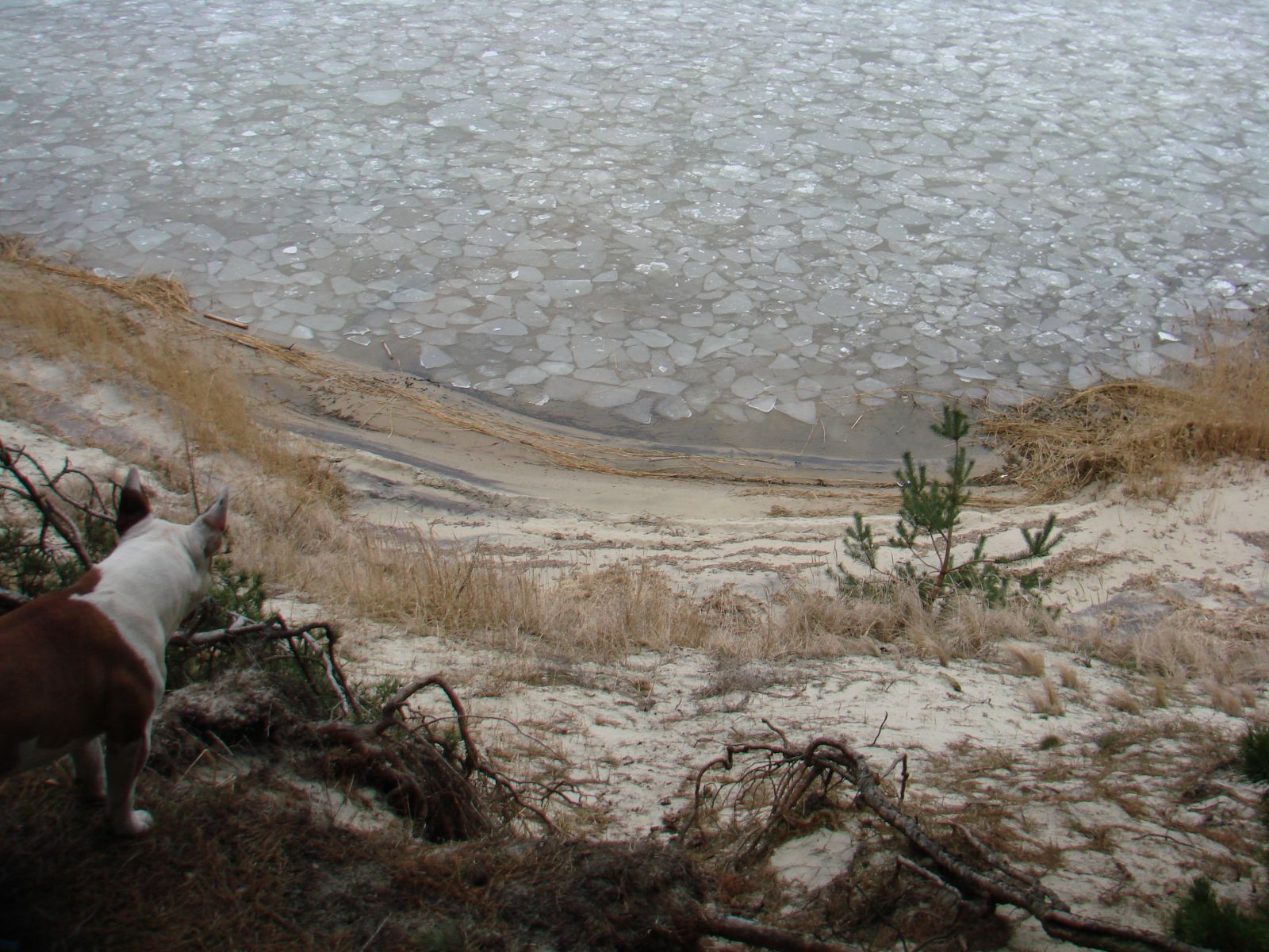 Зима залив2