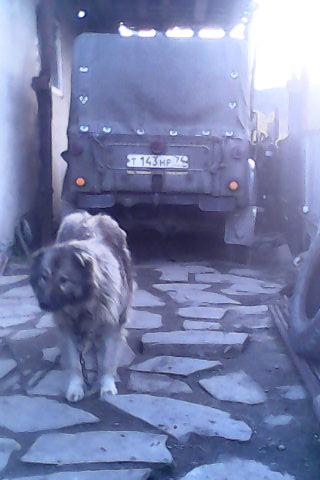 мой газон и мой пёс