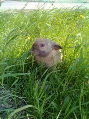 кроличка