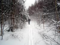 10 лес.jpg