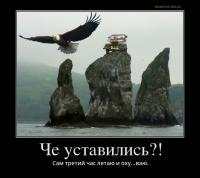 post-11938-0-01099600-1486041262_thumb.jpg