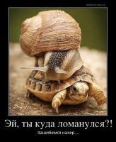 post-11938-0-03774700-1486041422_thumb.jpg