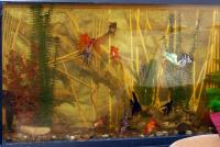 Рыбки..jpg