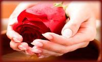 rose-1-21.jpg