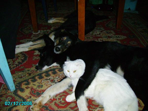 Молодые суки на отдыхе (Тетка и Ласка)